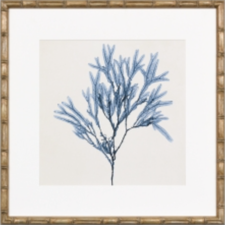 Navy blue coral print with gold faux frame FPCOASEA8