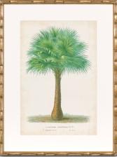 palm print 2