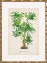 palm print 3