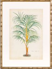 palm print with faux bamboo frame