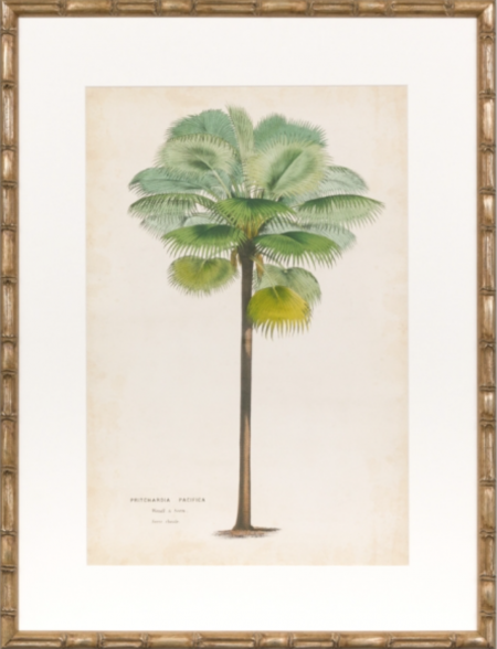 palm print in bamboo style frame