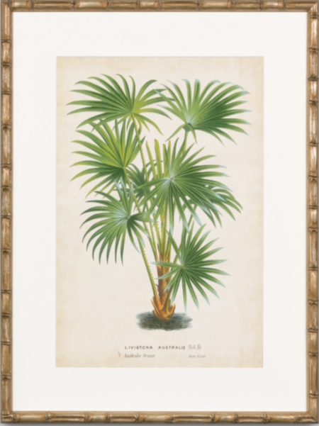 Palm print with bamboo style frame