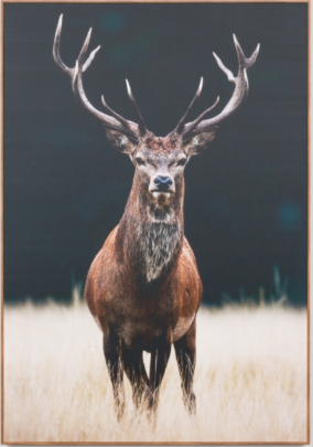 deer photo on canvas