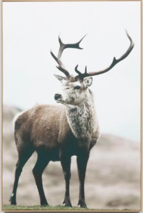 elk canvas in timber frame
