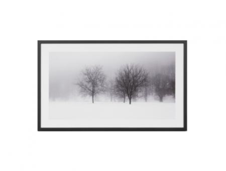 Forest black & white print in a black frame