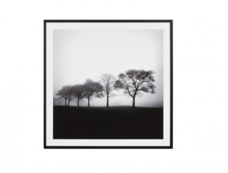 Tree black & white print in a black frame