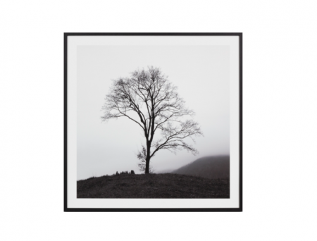 Tree on a hill black & white print in a black frame